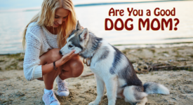 5 Secrets All Dog Moms Must Know To Keep Dogs Happy